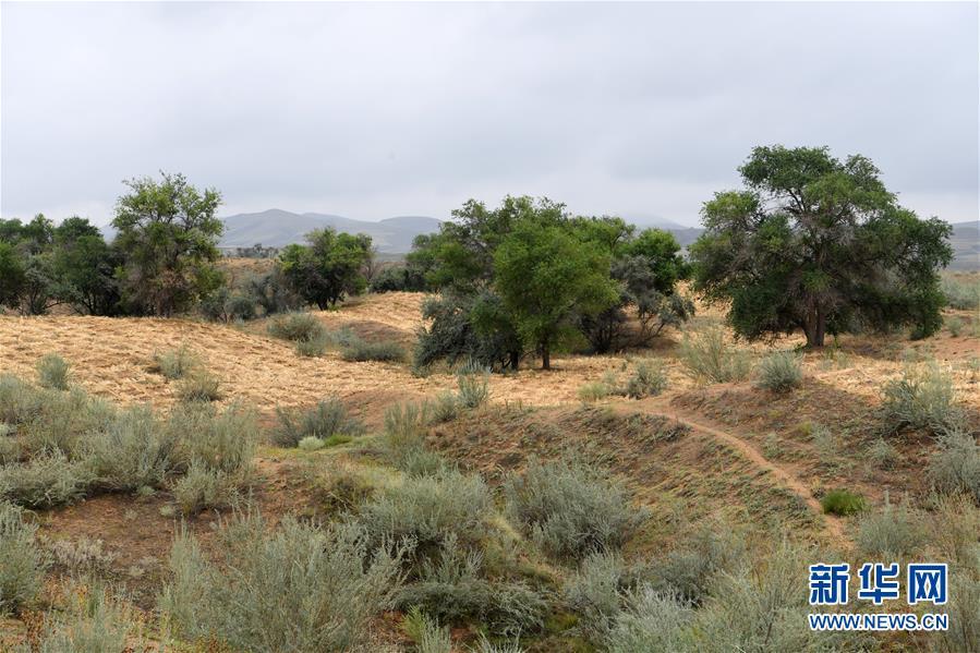 (新华全媒头条·图文互动)(2)为了美丽的绿水青山——习近平总书记考察生态文明建设回访