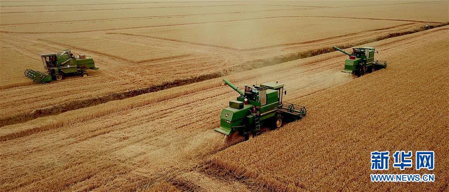 (新华全媒头条·图文互动)(1)大国粮仓的新时代交响——河南农业70年观察