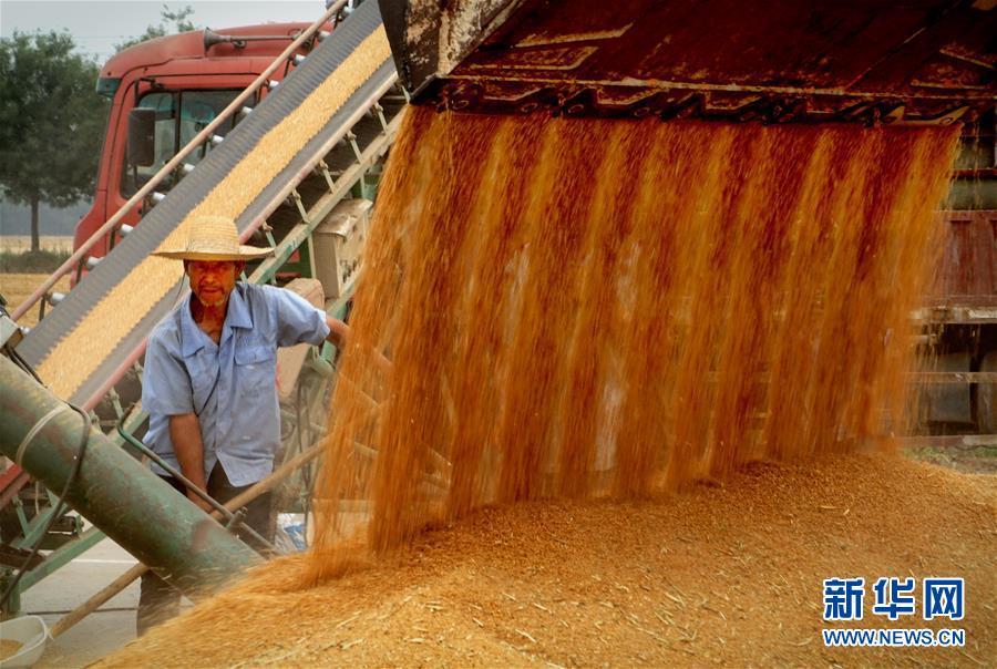 (新华全媒头条·图文互动)(3)大国粮仓的新时代交响——河南农业70年观察