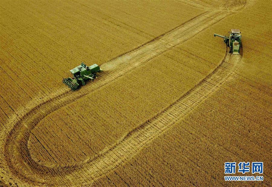 (新华全媒头条·图文互动)(6)大国粮仓的新时代交响——河南农业70年观察