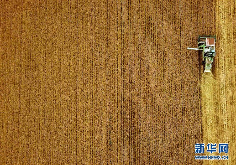 (新华全媒头条·图文互动)(7)大国粮仓的新时代交响——河南农业70年观察