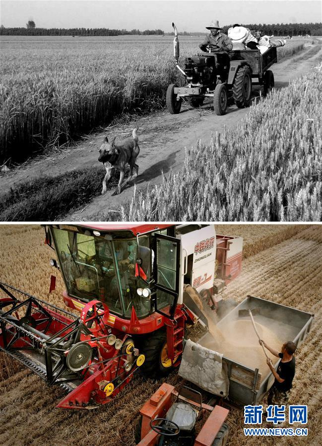 (新华全媒头条·图文互动)(8)大国粮仓的新时代交响——河南农业70年观察