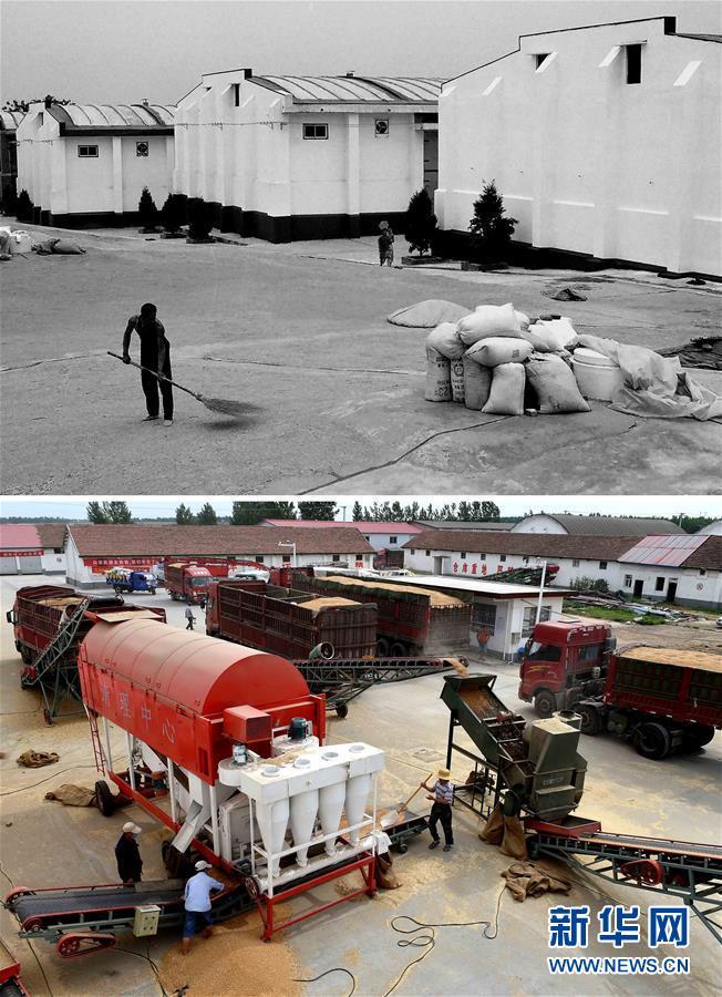 (新华全媒头条·图文互动)(9)大国粮仓的新时代交响——河南农业70年观察