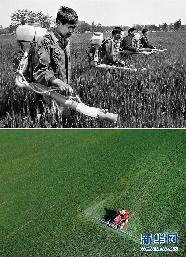 (新华全媒头条·图文互动)(10)大国粮仓的新时代交响——河南农业70年观察