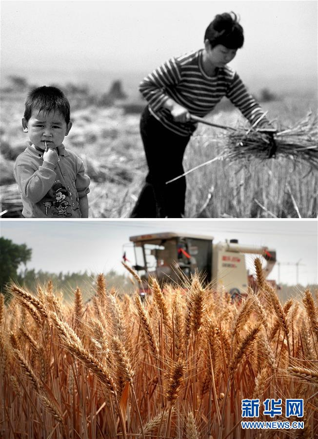 (新华全媒头条·图文互动)(11)大国粮仓的新时代交响——河南农业70年观察