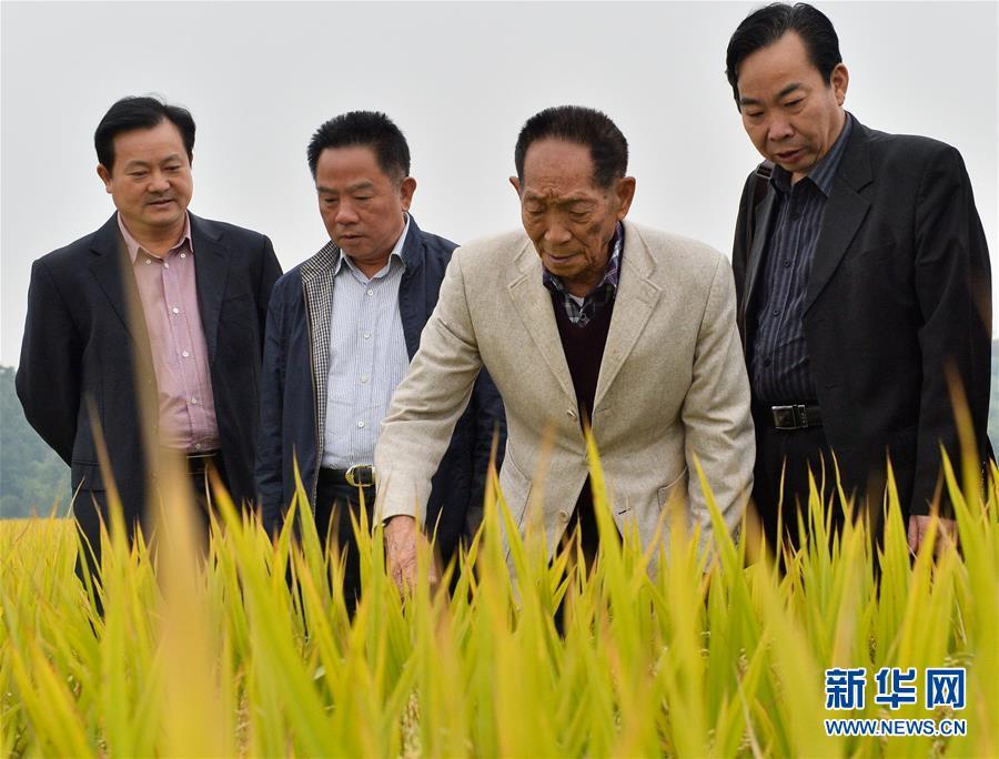 (壯麗70年·奮斗新時代——共和國榮光·圖文互動)(2)袁隆平:把對祖國的熱忱結成飽滿的稻穗