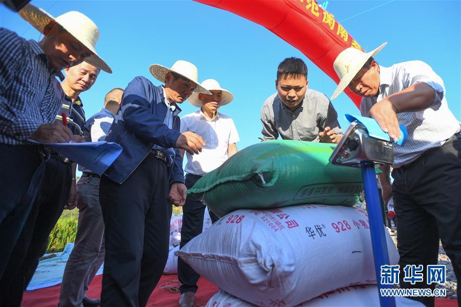 (圖文互動)(2)1046.3公斤!袁隆平第三代雜交水稻首次公開測産