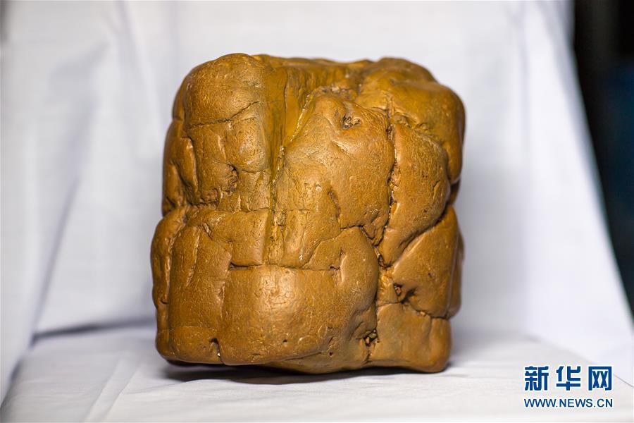 (圖文互動)(1)黑龍江海倫發現罕見古生物群