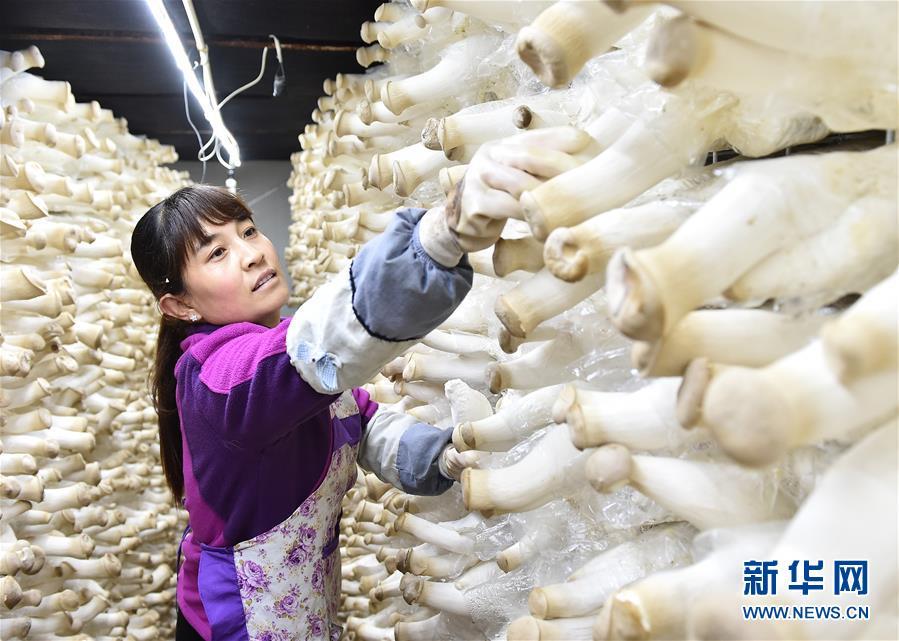 (社会)(2)河北平泉:温室大棚暖寒冬