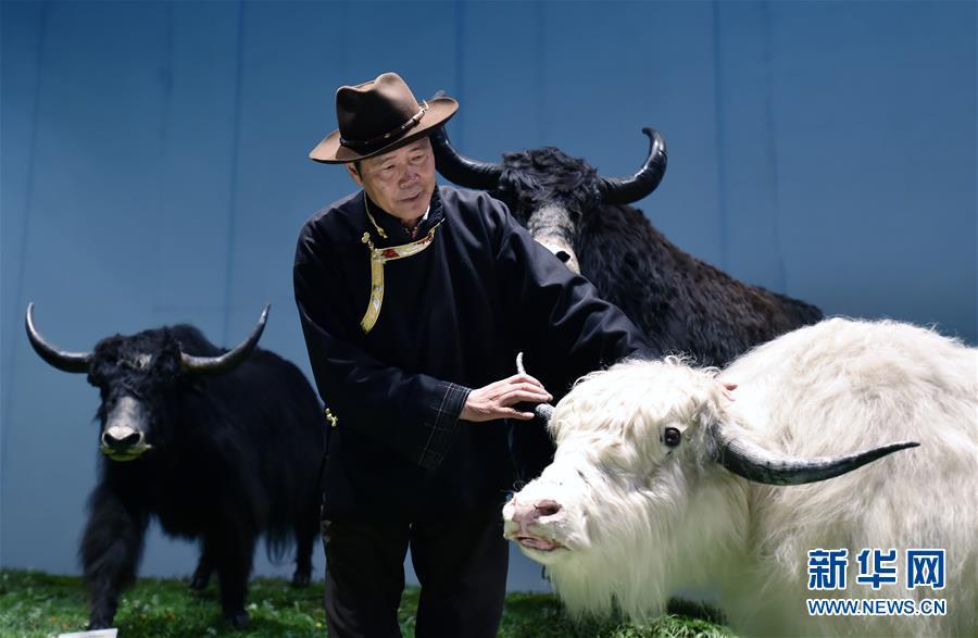 """(新華全媒頭條·圖文互動)(2)""""老牦牛""""亞格博的西藏情緣——記北京援藏幹部吳雨初"""