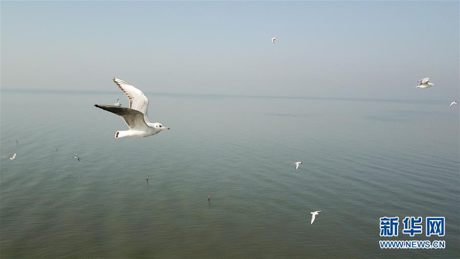 (新華全媒頭條·圖文互動)(1)大湖見證——長三角三大淡水湖綠色發展之路