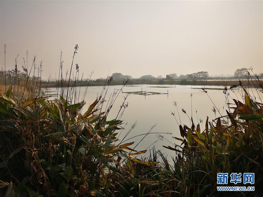 (新華全媒頭條·圖文互動)(6)大湖見證——長三角三大淡水湖綠色發展之路