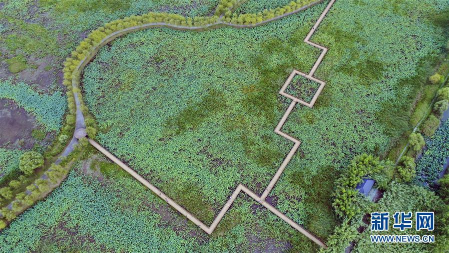 (新華全媒頭條·圖文互動)(9)大湖見證——長三角三大淡水湖綠色發展之路