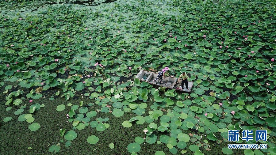 (新華全媒頭條·圖文互動)(14)大湖見證——長三角三大淡水湖綠色發展之路