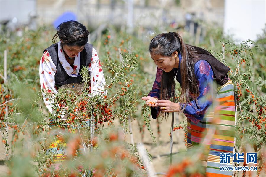 (新華全媒頭條·兩會特別報道·圖文互動)(7)在推進高質量發展中創造廣闊空間——從全國兩會看奮進中國的發展機遇