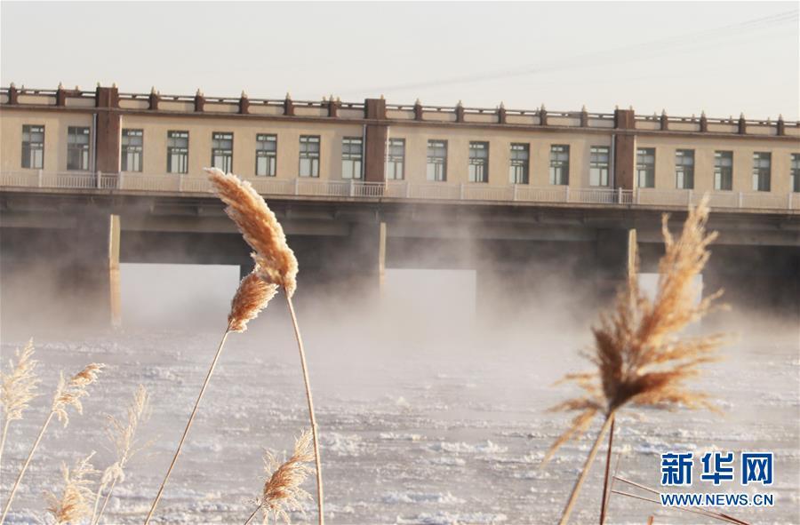 """(環境)(4)黃河三盛公水利樞紐庫區出現""""水煮黃河""""景觀"""