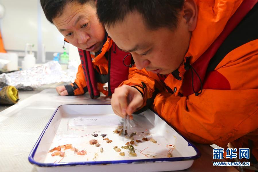 (图文互动)(4)这里到处生机勃勃——南极宇航员海动物世界探秘