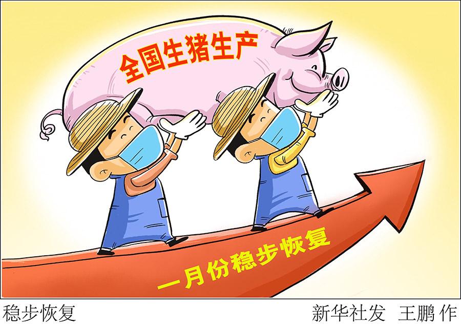 1月份全国生猪出栏增加 生猪生产稳步恢复