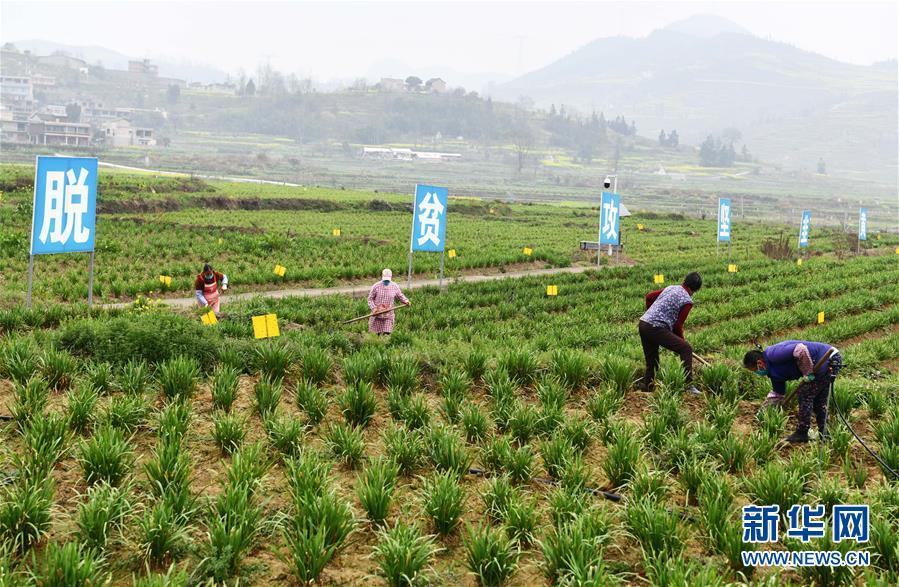 (在习近平新时代中国特色社会主义思想指引下——新时代新作为新篇章·习近平总书记关切事·图文互动)(2)确保不误农时,保障夏粮丰收——各地抓好春耕生产在行动