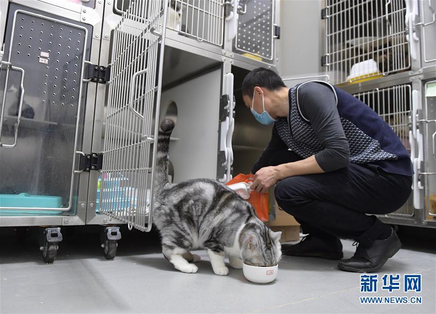 """(聚焦疫情防控)(1)武漢:動物醫院裏的臨時""""奶爸"""""""