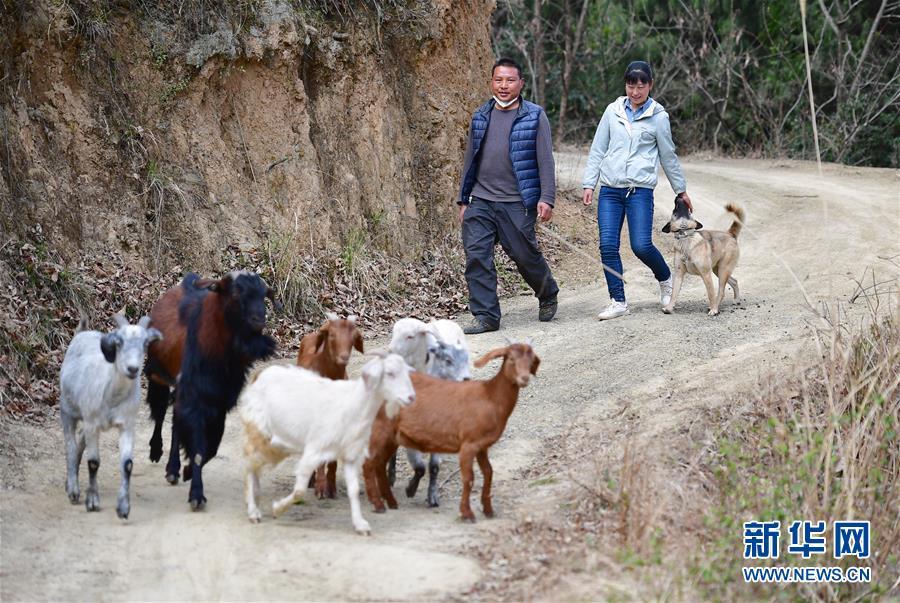 (新华全媒头条·图文互动)(7)奔向新的幸福——陕西贫困县全部摘帽的N个截面