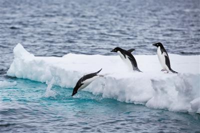 """摸清南极固定冰""""家底"""",不但关乎企鹅繁衍和捕食"""