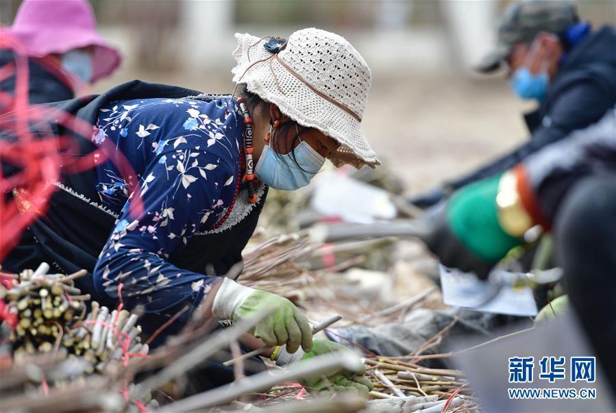 (新華全媒頭條·圖文互動)(13)三江之源見證中國奇跡——寫在玉樹地震10周年之際