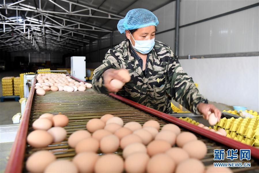 (決戰決勝脫貧攻堅·圖文互動)(1)河南汝陽:發展特色種植養殖産業助力農民脫貧