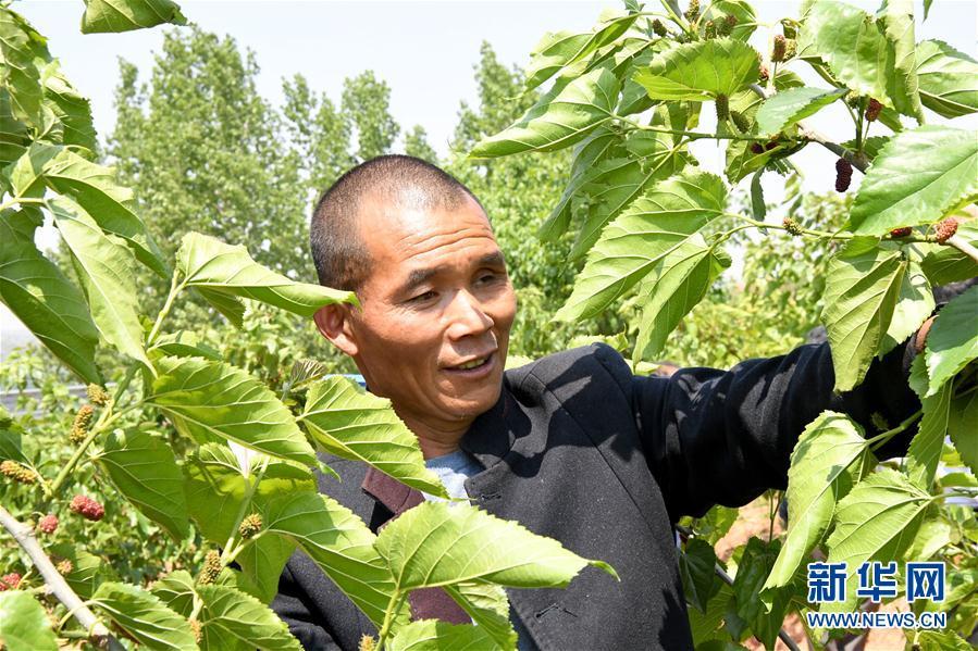 (決戰決勝脫貧攻堅·圖文互動)(2)河南汝陽:發展特色種植養殖産業助力農民脫貧