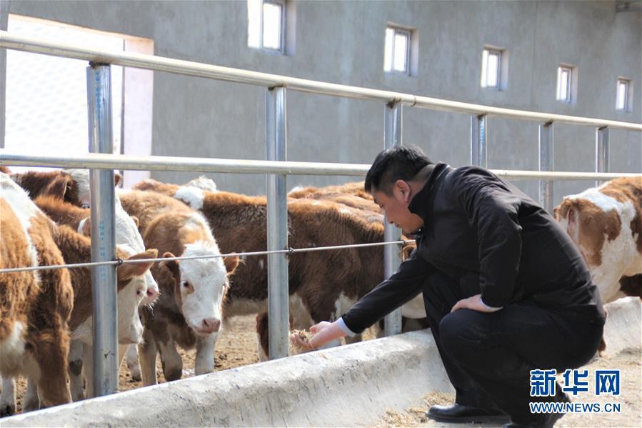 """(脱贫攻坚·扶贫印记)(4)""""牛书记""""带领牧民发展""""牛产业""""助力脱贫"""