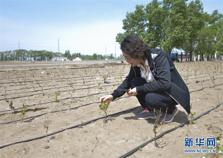 (两会·漫话图说)(5)全国人大代表郭艳玲:保护草原生态 促进畜牧业发展