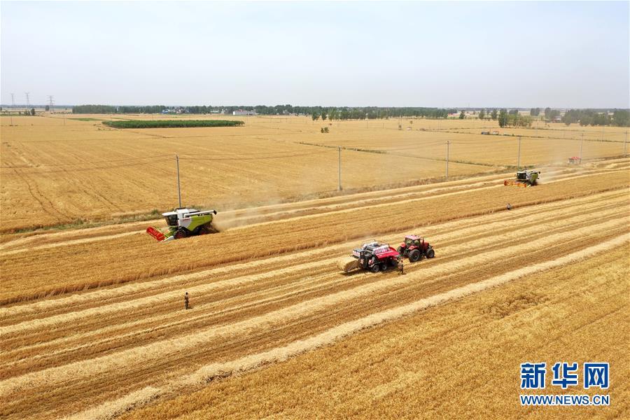 (关注三夏·图文互动)(1)效率提高 模式变革——河南麦收新观察