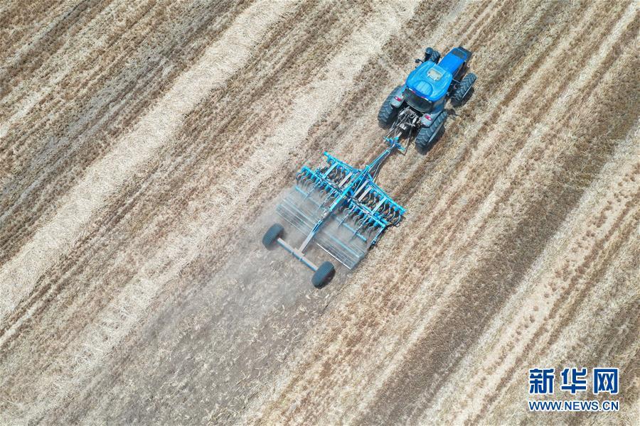 (关注三夏·图文互动)(4)效率提高 模式变革——河南麦收新观察