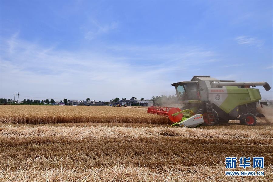 (关注三夏·图文互动)(2)效率提高 模式变革——河南麦收新观察