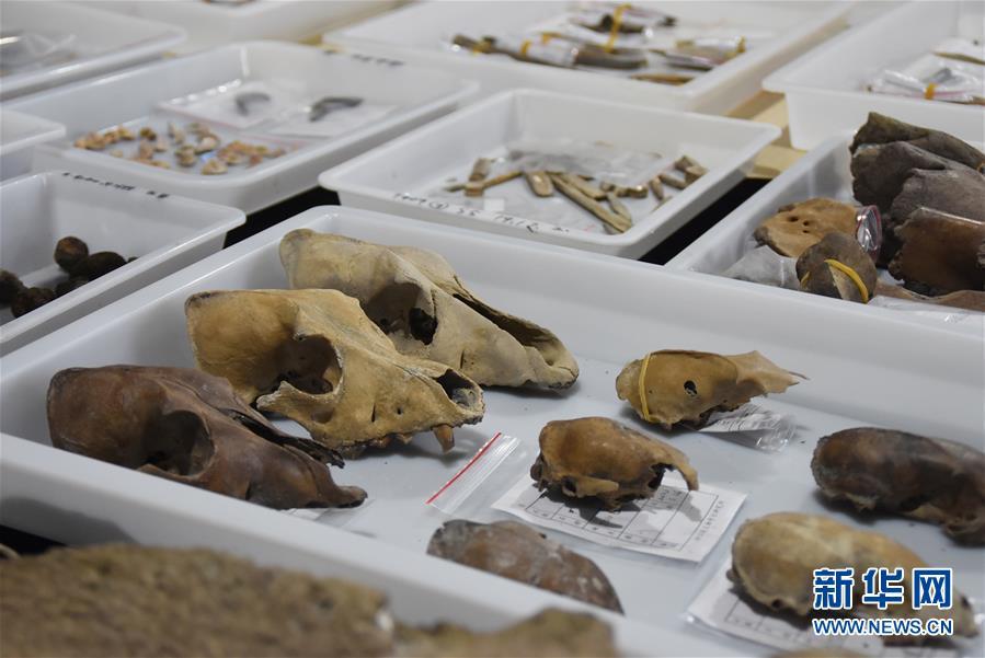 (圖文互動)(3)浙江余姚發現早于河姆渡文化1000年的史前遺址