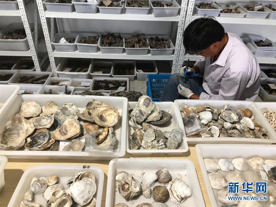 (圖文互動)(4)浙江余姚發現早于河姆渡文化1000年的史前遺址