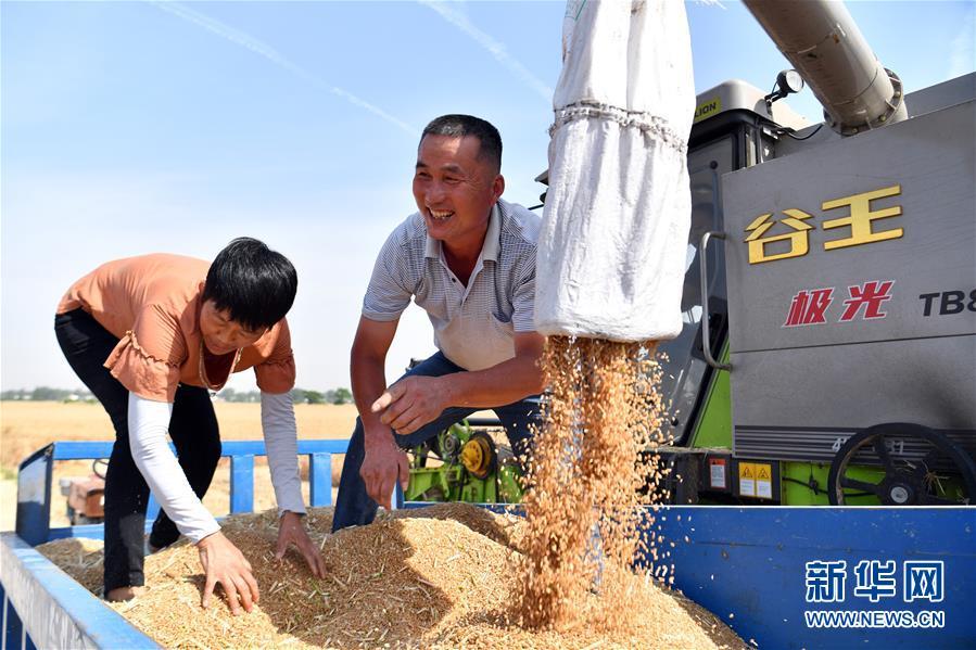 (新华全媒头条·图文互动)(5)不寻常的耕耘,不一般的收获——我国夏粮主产区夏收观察