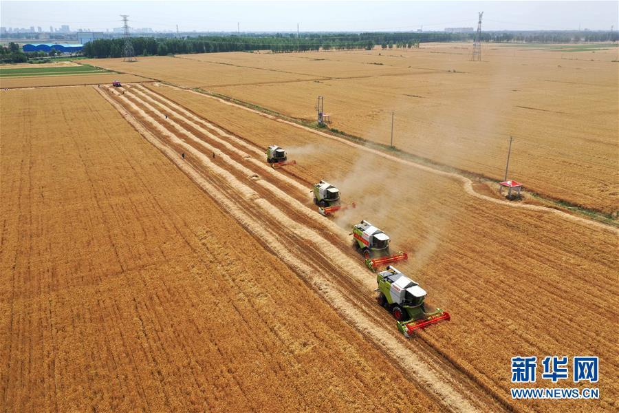 (新华全媒头条·图文互动)(6)不寻常的耕耘,不一般的收获——我国夏粮主产区夏收观察