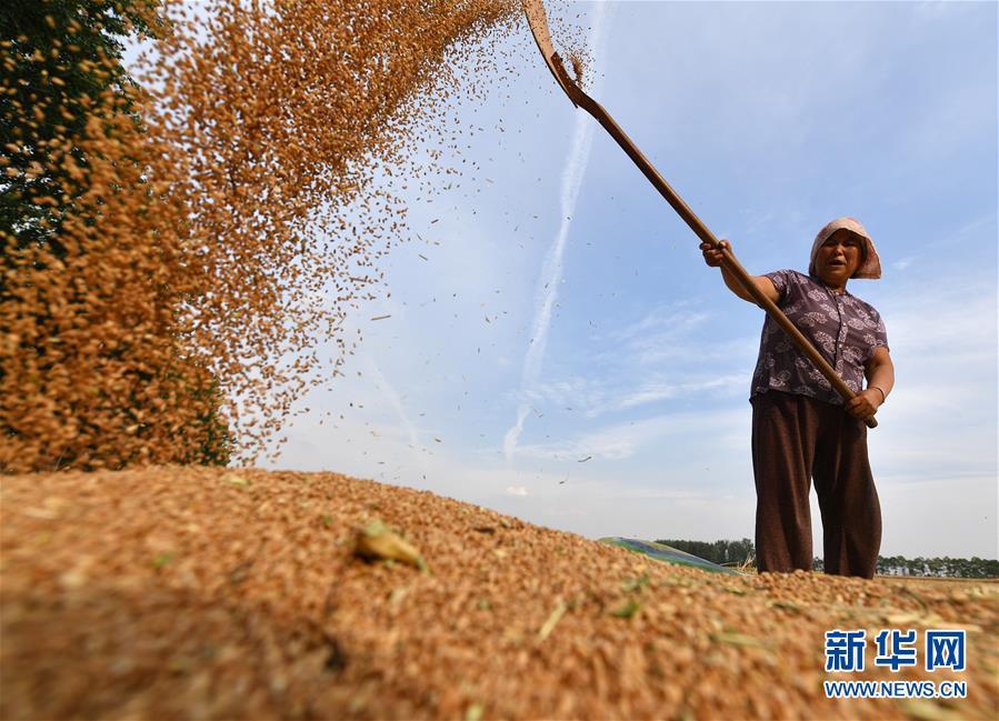(新华全媒头条·图文互动)(9)不寻常的耕耘,不一般的收获——我国夏粮主产区夏收观察