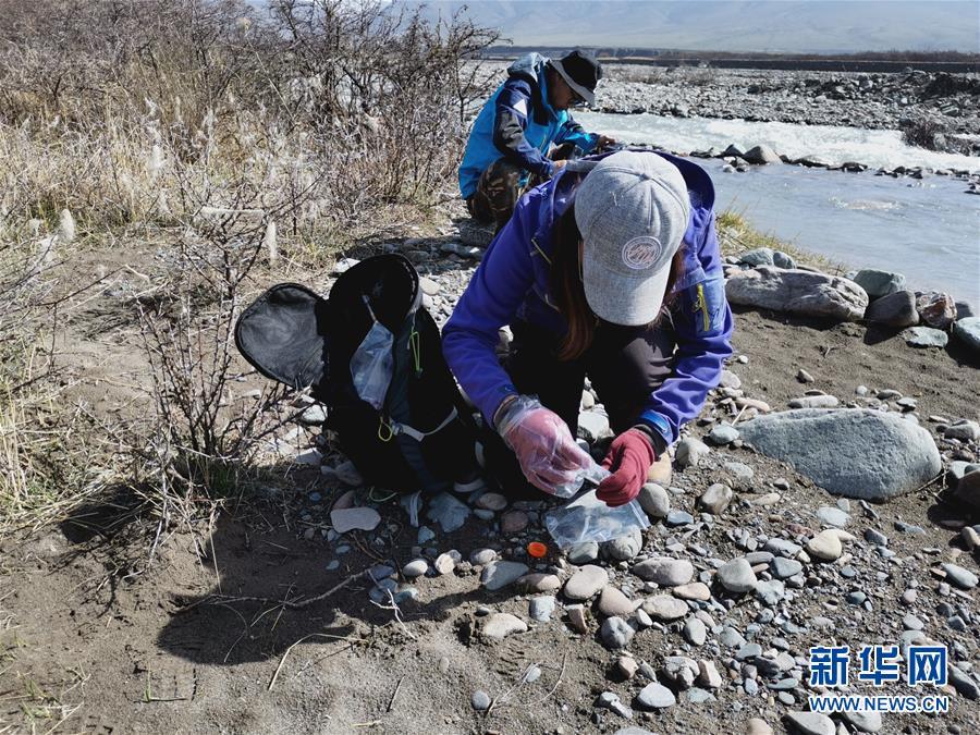 (圖文互動)(2)祁連山國家公園首個荒漠貓專項調查取得階段性成果