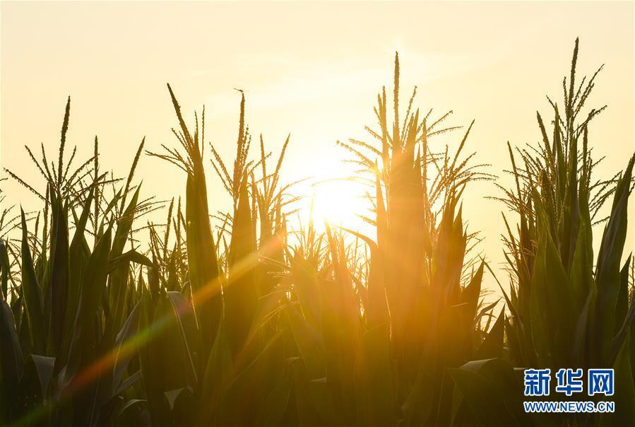 食为政首——稳住农业基本盘增添发展底气