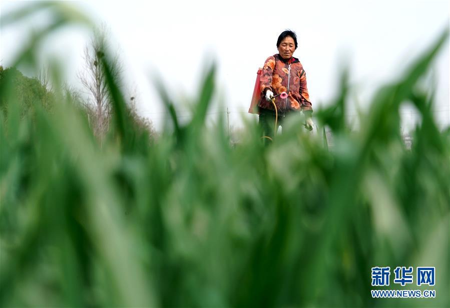 (在习近平新时代中国特色社会主义思想指引下——新时代新作为新篇章·习近平总书记关切事·图文互动)(4)食为政首——稳住农业基本盘增添发展底气