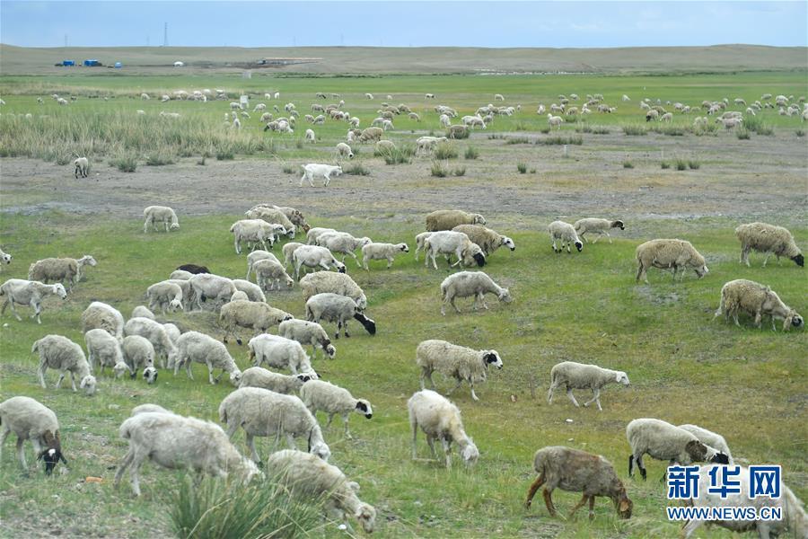 (走向我們的小康生活·圖文互動)(1)草原有了網,手機能放羊——看呼倫貝爾大草原牧民生活變了樣