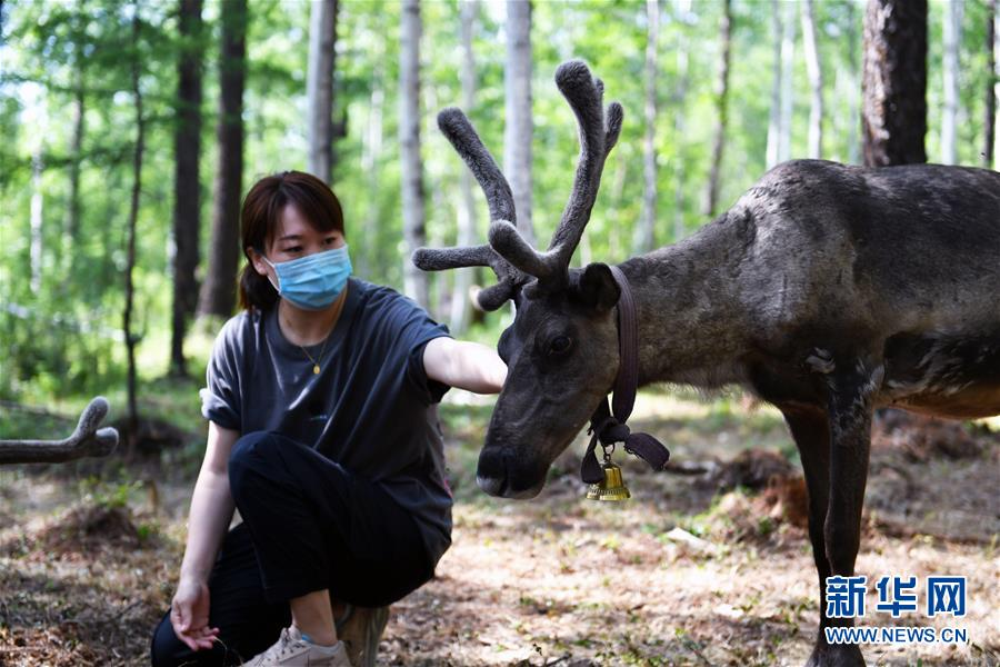 (新华全媒头条·走向我们的小康生活·图文互动)(9)走出山林奔小康——鄂温克族迎来新生活