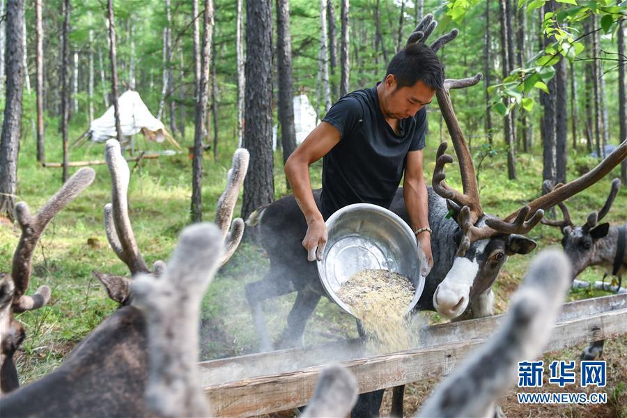 (新華全媒頭條·走向我們的小康生活·圖文互動)(2)走出山林奔小康——鄂溫克族迎來新生活