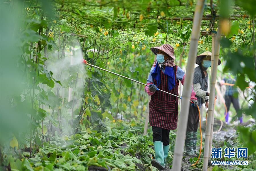 (经济)(1)湖南永州:开展灾后生产自救