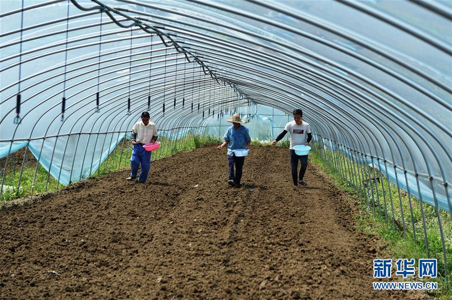 (防汛抗洪)(1)安徽肥东:恢复生产 灾后自救