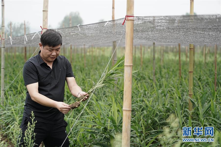 (防汛抗洪)(1)安徽铜陵:积极开展生产自救