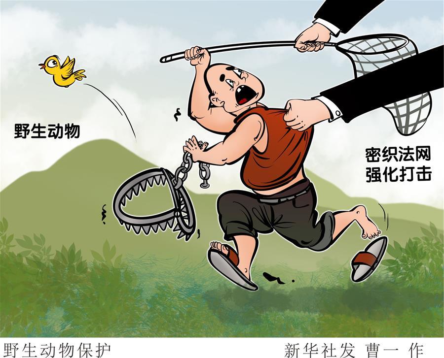 (圖表·漫畫)〔新華調查·聚焦野生動物保護〕野生動物保護