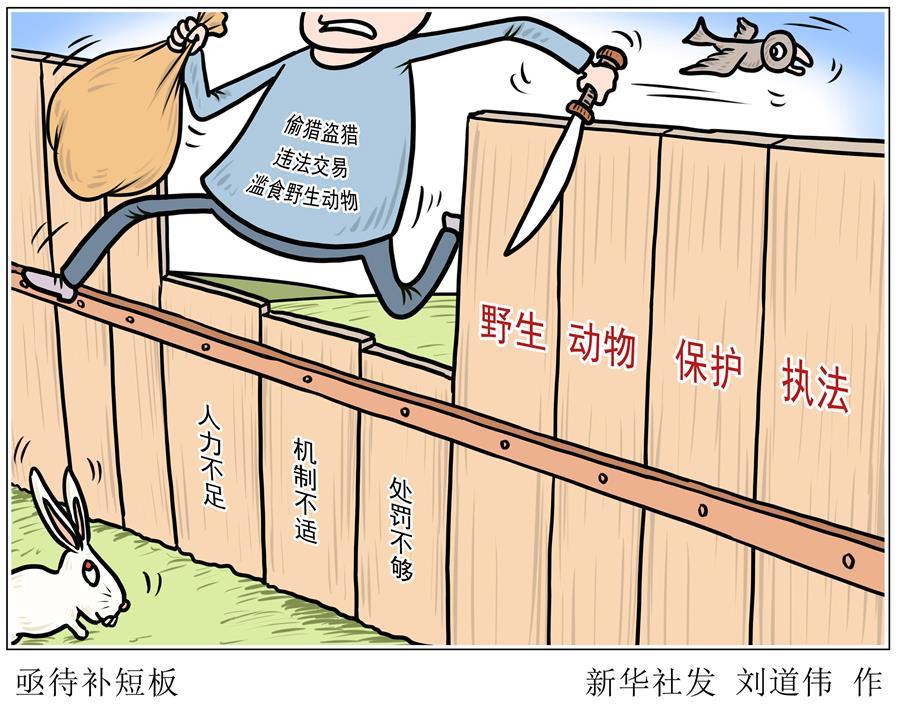 (圖表·漫畫)〔新華調查·聚焦野生動物保護〕亟待補短板